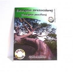 Eucalyptus mrazuvzdorný semena 20 Ks