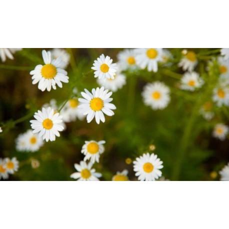 Heřmánek Květ Vážený 30g